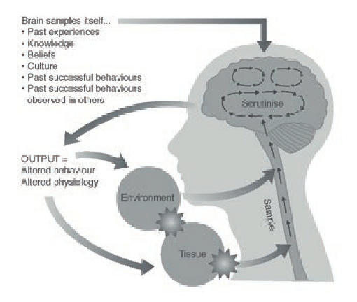 The Mature Organism basic framework: not only